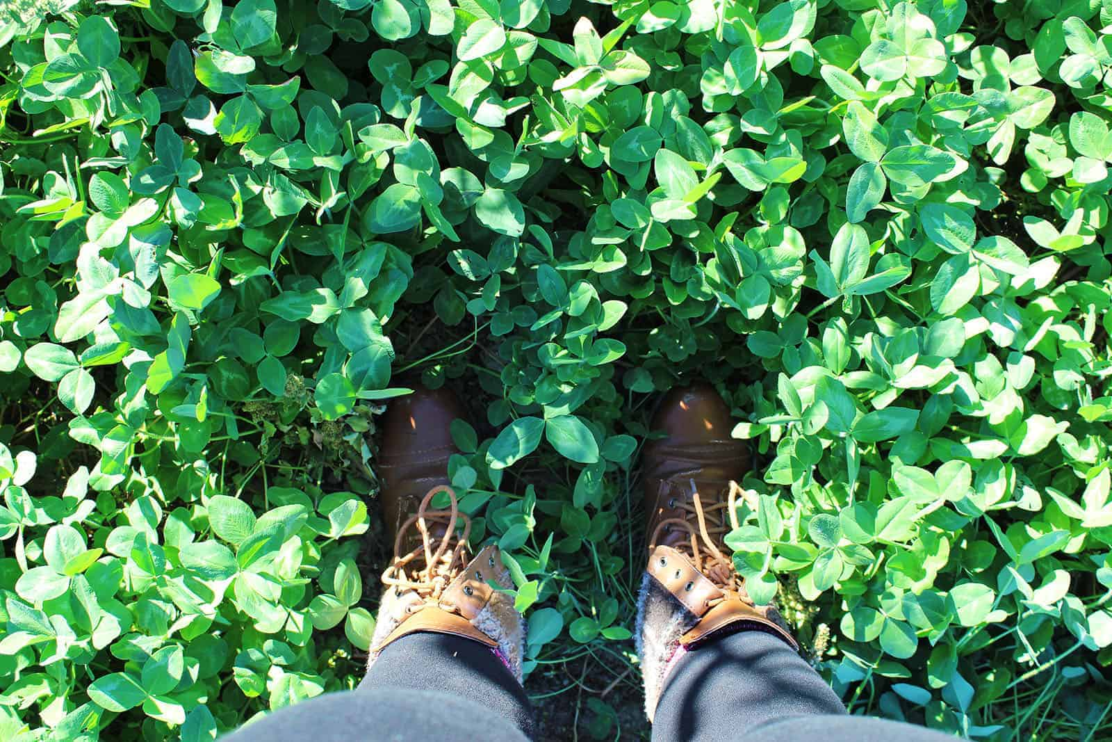 Farm to Table with CK Table
