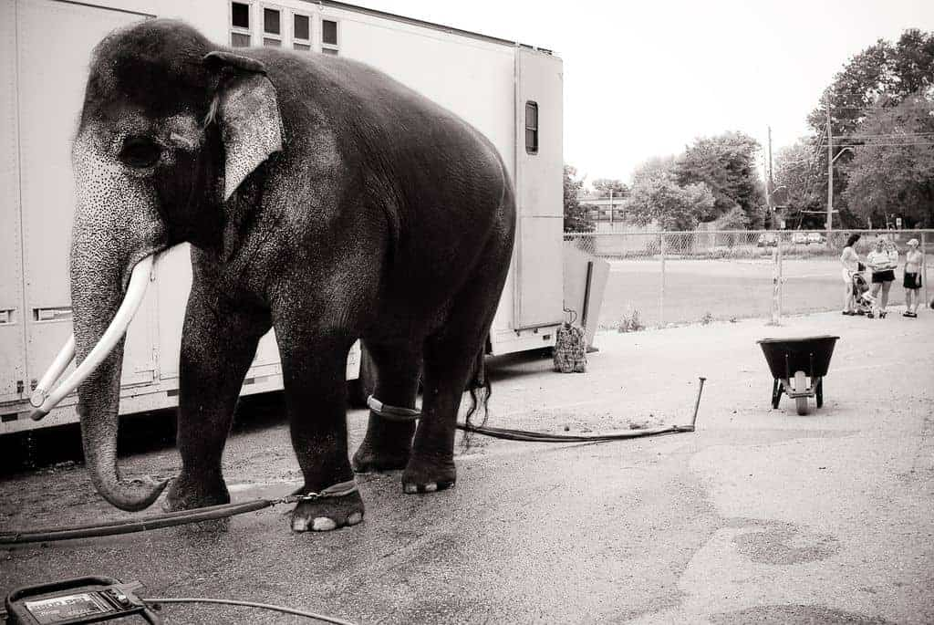 Interview with Jo-Anne McArthur / We Animals