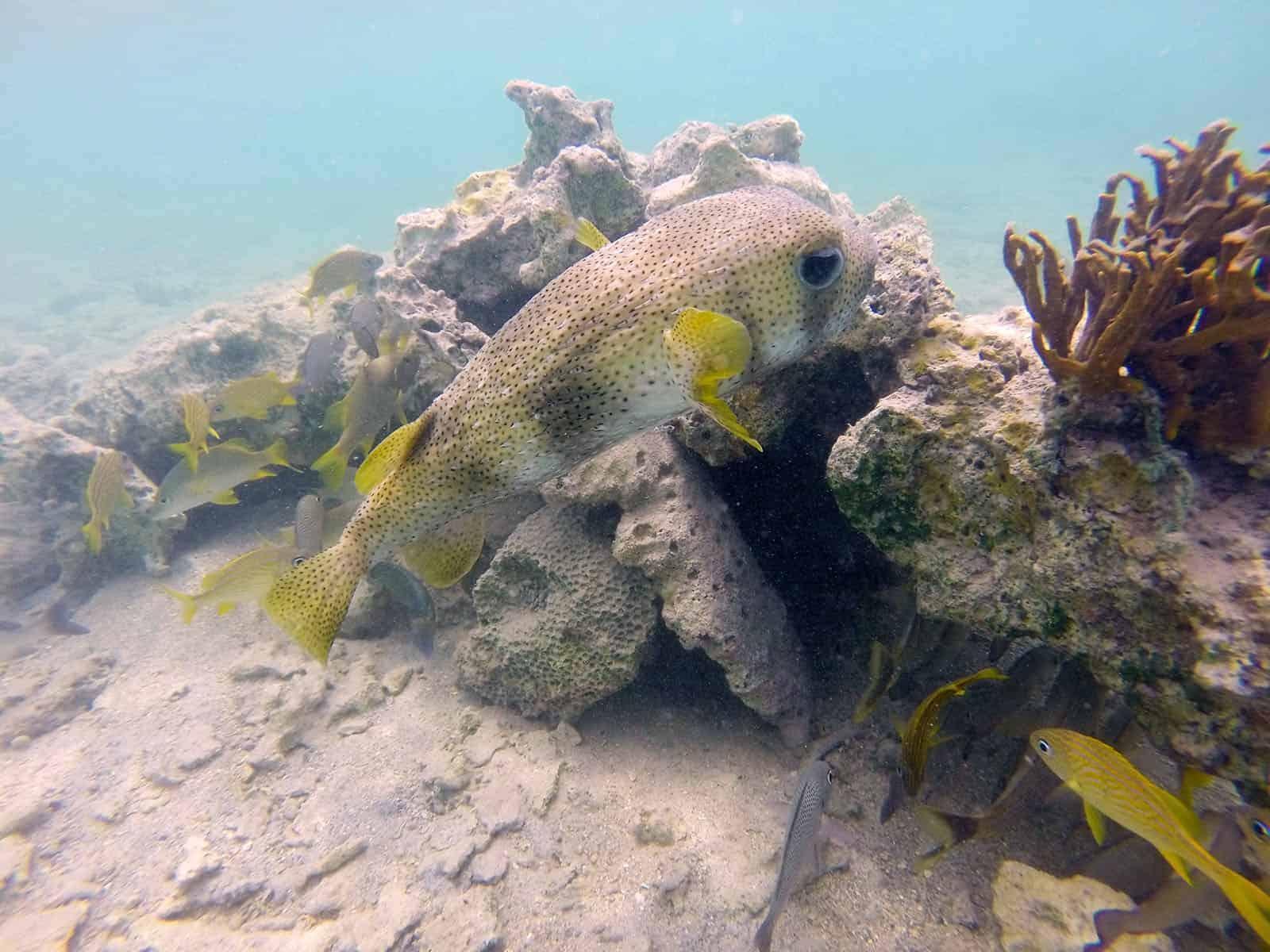 St Thomas Ecotour at Cas Cay Mangrove Lagoon and Wildlife Sanctuary