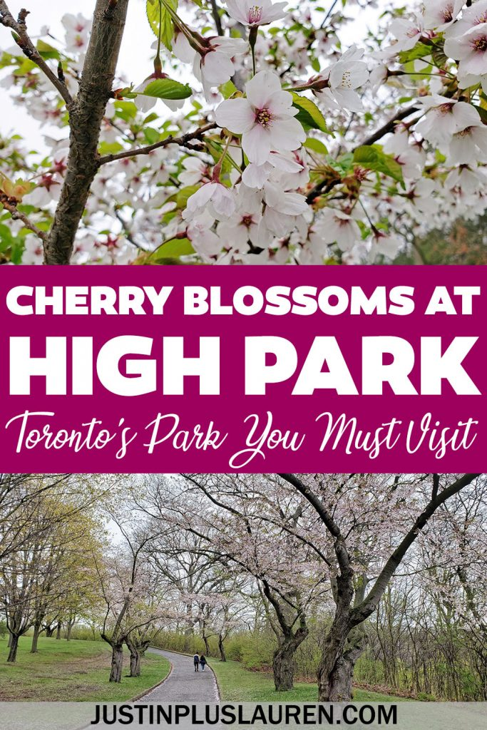 Here's how to see the High Park cherry blossoms in Toronto, the beautiful sakura trees that bloom every spring in Toronto, Ontario.