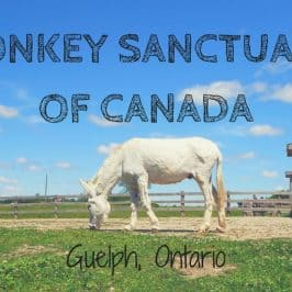 Donkey Sanctuary of Canada in Guelph, Ontario