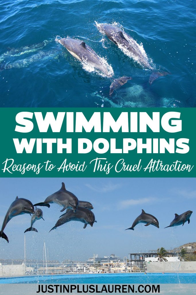 Swimming with Dolphins is bad, cruel, and unnecessary. Here's why you should never swim with dolphins and what you can do instead when traveling.