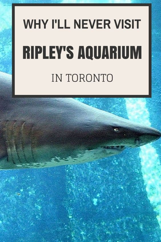Why I'll Never Visit Ripley's Aquarium in Toronto