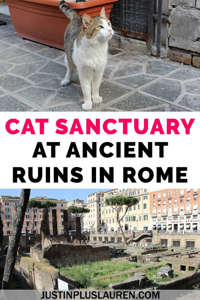 There's a cat sanctuary in Rome that you can visit where the cats live among ancient Roman ruins! Read more about our visit to Largo di Torre Argentina cat sanctuary and how you can plan your trip, too. #Rome #Italy #Travel #Cats #CatSanctuary #CatRescue