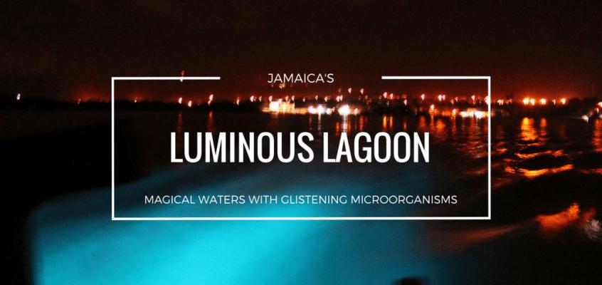 The Magical Waters of Luminous Lagoon Jamaica