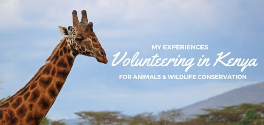 My Experiences Volunteering in Kenya for Animals