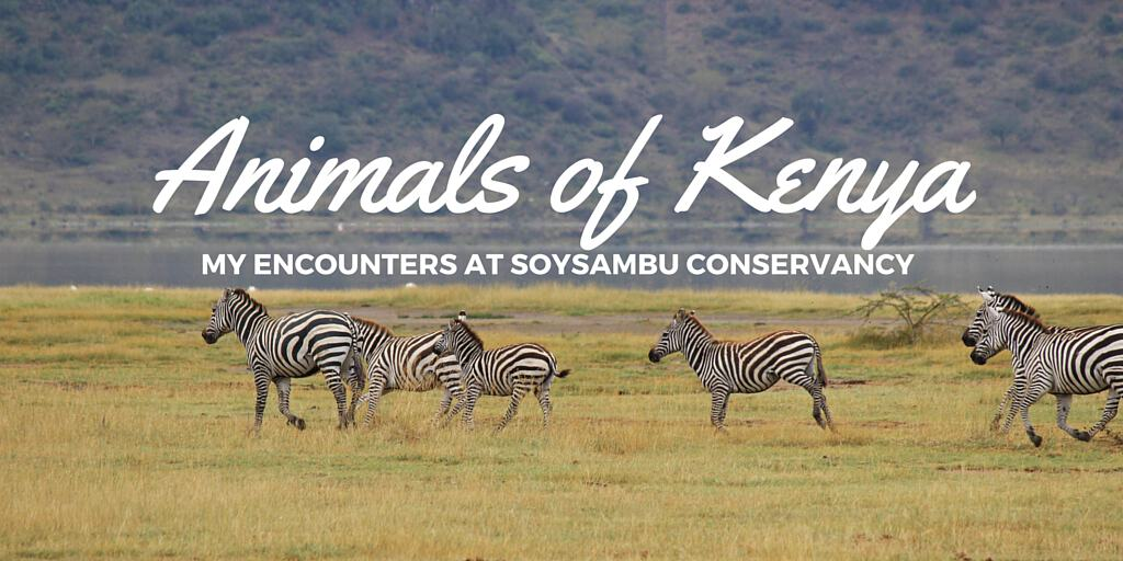 Animals of Kenya