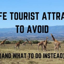 Wildlife Tourist Attractions to Avoid (and What to do Instead)