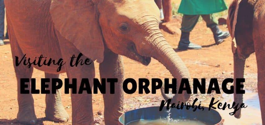 Visiting the Elephant Orphanage Nairobi, Kenya