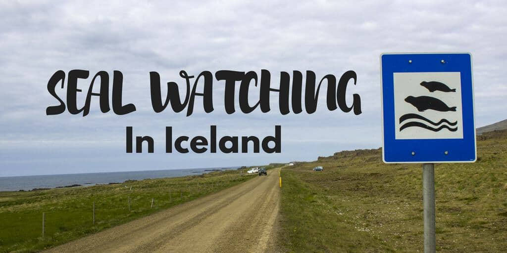 Seal Watching in Iceland - Hvammstangi and Vatnsnes Peninsula