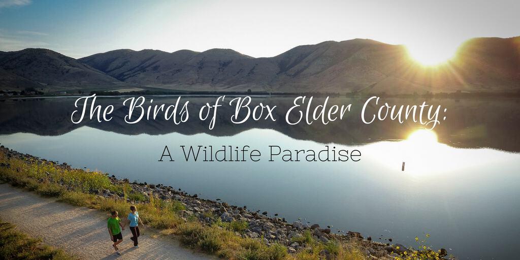 The Birds of Box Elder County - A Wildlife Paradise