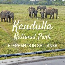 Kaudulla National Park: See Elephants in Sri Lanka