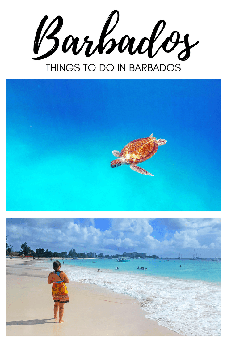 Things to Do in Barbados | A Day in Barbados | Cruise Ship Travel | Barbados - Caribbean | Carlisle Beach | Swimming with Turtles