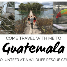 I'm Volunteering in Guatemala Helping Animals (And You're Invited!)
