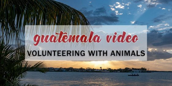 Guatemala Video: Volunteer Work With Animals and Wildlife in Guatemala