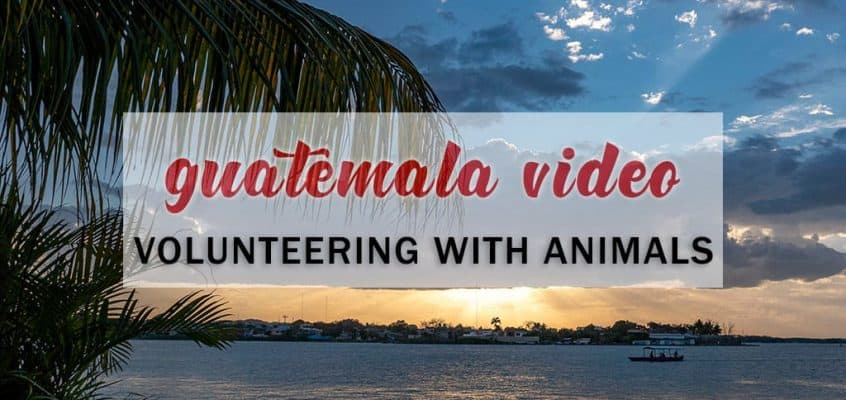 Guatemala Video: Volunteer Work With Animals and Wildlife in Guatemala