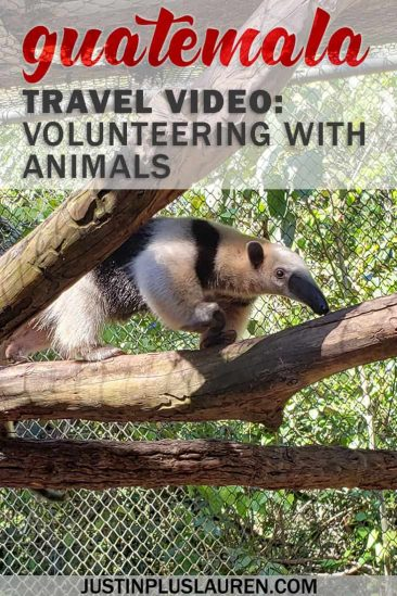 Guatemala Video: Volunteer Work With Animals and Wildlife in Guatemala - #Guatemala #Video #TravelVideo #Volunteer #Animals #Wildlife #Conservation