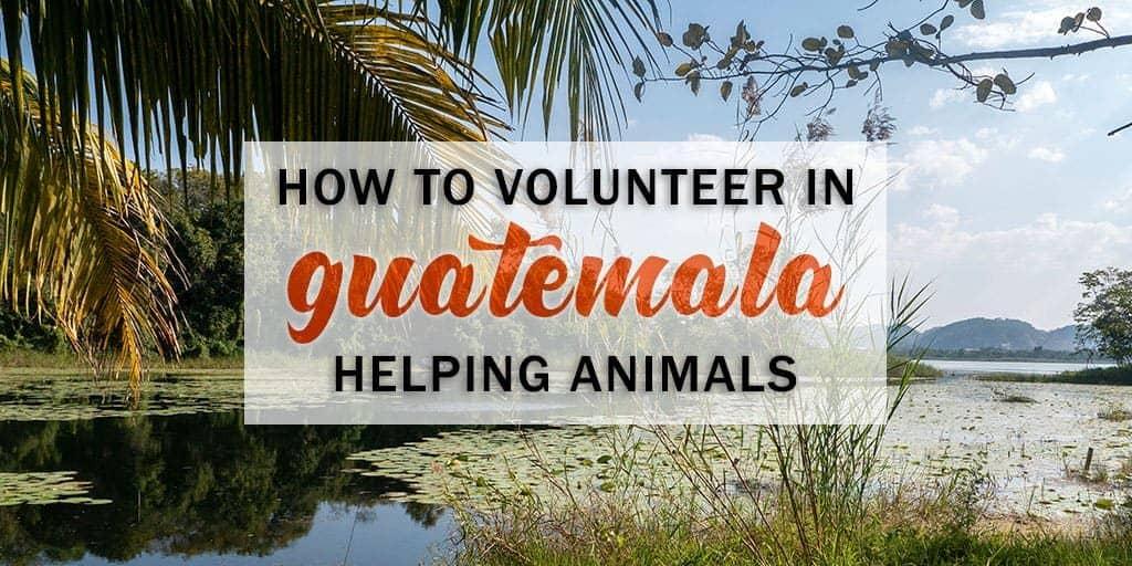 Volunteering with Animals in Guatemala