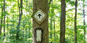 Hiking the Bruce Trail to Louth Conservation Area