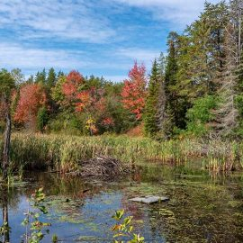 Bonnechere Provincial Park