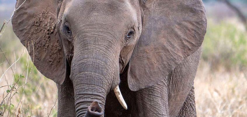 Luxury Safari in Tanzania
