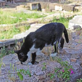 The Cats of Rome: Torre Argentina Cat Sanctuary